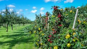 Drvo jabuke © Pixabay