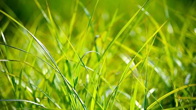 Trava - © Pixabay