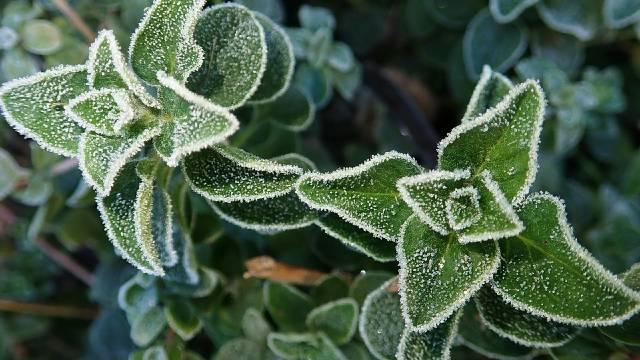Priprema začinskog bilja za zimu - © Pixabay