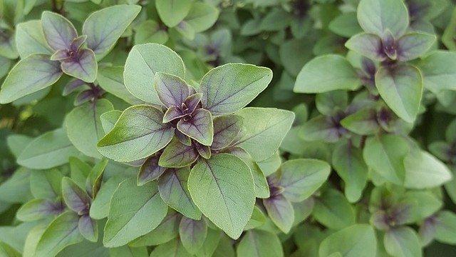 Preporučujemo za sadnju: Tri biljke koje umanjuju stres i anksioznost© Pixabay
