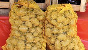 Krompir u džakovima