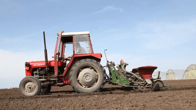 Setva kukuruza