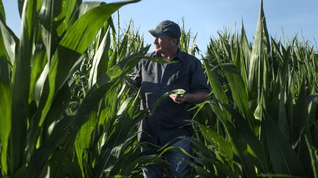 Poljoprivrednik u polju kukuruza