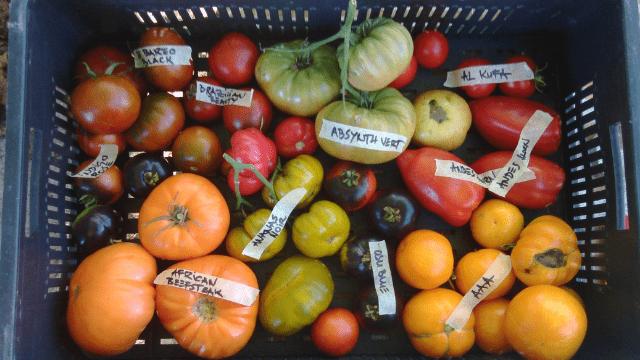 Stare sorte povrća