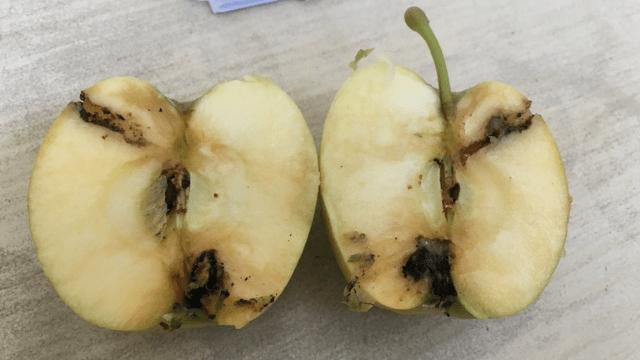 Štete od jabukinog smotavca