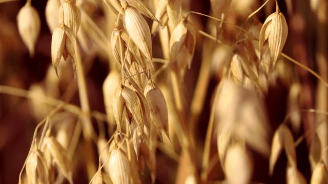 Parcela pod krompirom