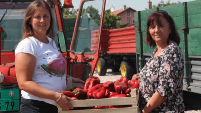 Marina Džužar, proizvođač paprike i Dušica Oros
