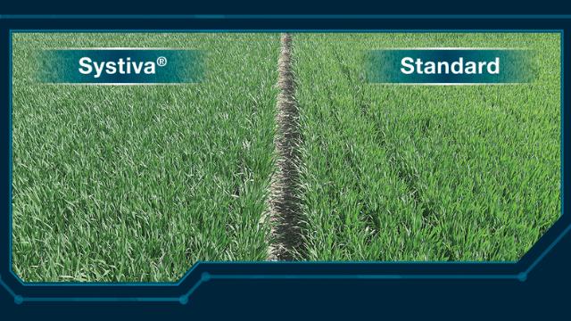 Systiva® i standard