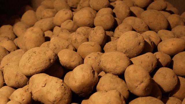 Skladištenje krompira